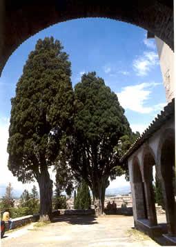 Alberi monumentali di Rieti e Provincia
