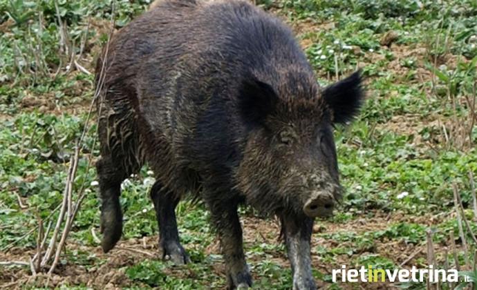 Regione Lazio, rimborsi danni causati da animali selvatici