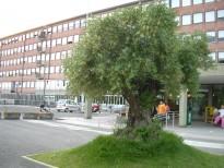 Ospedale De Lellis