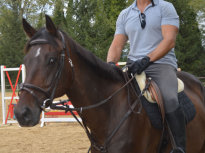 cavallo_6