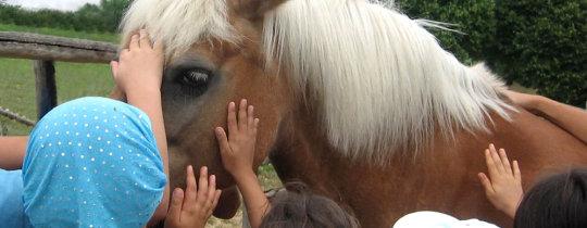 cavallo_cavalli_ippoterapia_1
