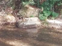 fiume_farfa_1