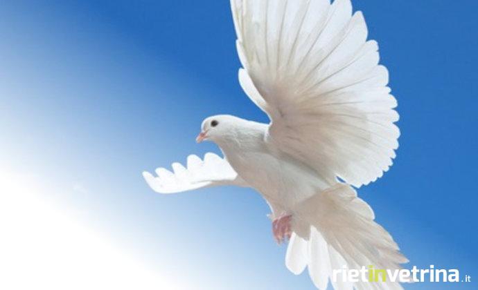 colomba_bianca