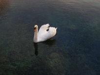 riserva_dei_laghi_giornata_dell_acqua_2018